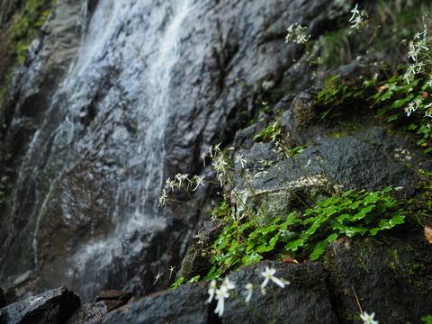 daimonjiso201012047