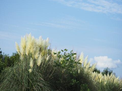 panpasgrass17081908