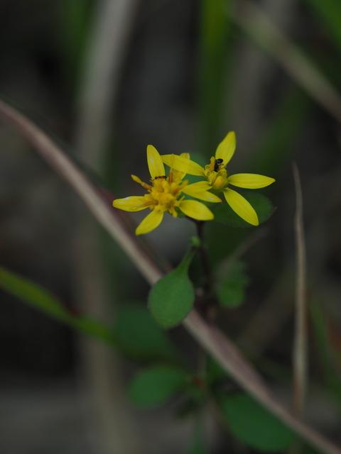 akinokirinso20101204