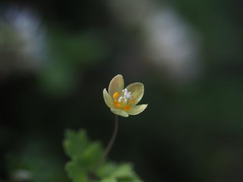 togokusabanoo18041905