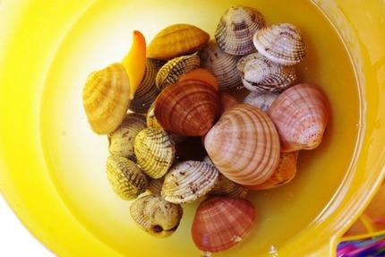 2011.03.07 shellfish1