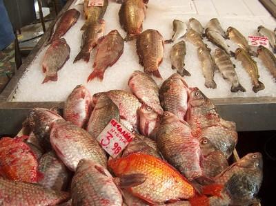 2008.03.04 fish market6