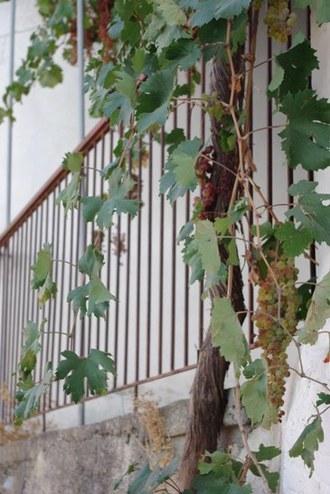 2009.09.04 grapes
