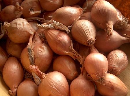 stifado onions