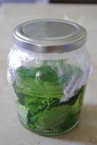 2012.08.18 shiso vinegar