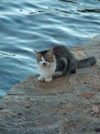 2008.08.30 cat1