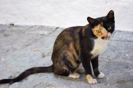 2010.08.28 cat1