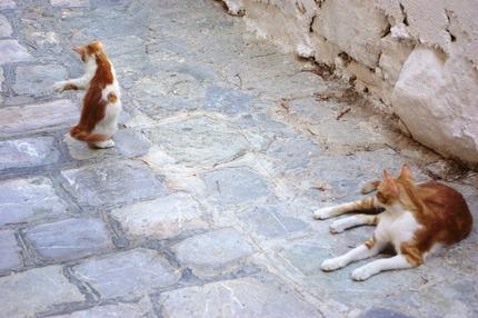 2011.08.19 cats1