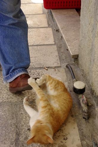 2011.08.19 cat3