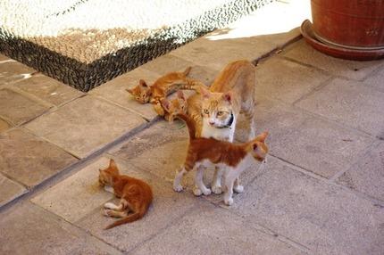 2011.08.25 cats2
