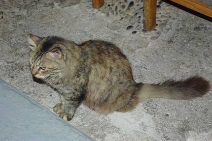 2011.08.20 cat