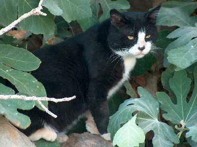 2008.08.30 cat2