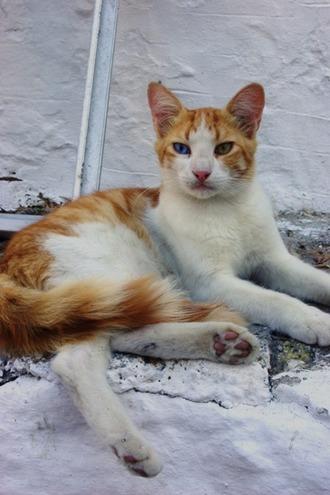 2011.08.24 panormitis cat