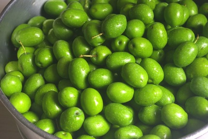 2017.10.11 olives
