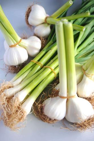 2013.04.20 fresh garlic