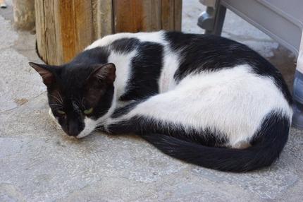 2010.08.28 cat2