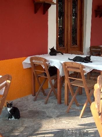 2008.09.02 cats@taverna