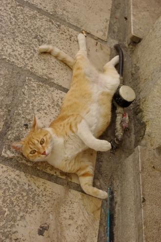 2011.08.19 cat1