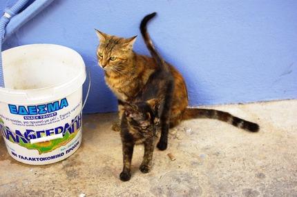 2010.08.29 cat3