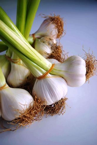 2013.04.20 fresh garlic2