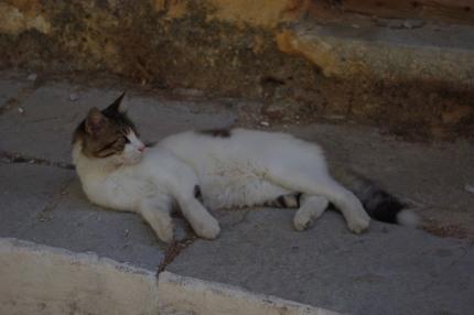 2009.09.02 cat