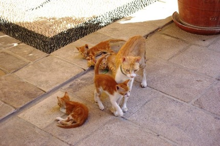 2011.08.25 cats1
