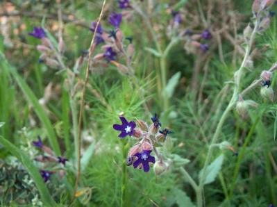 2009.04.19 wild flowers