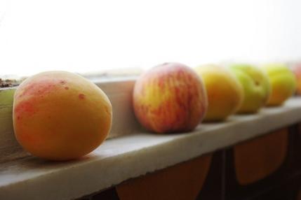 2009.06.08 apricots & peaches