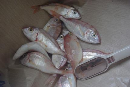 2016.09.21 fish