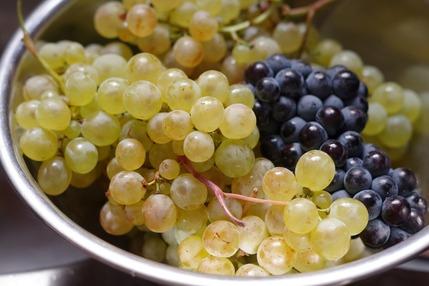 2020.10.14 grapes