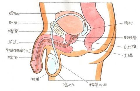 seiki_men