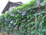 よその花4