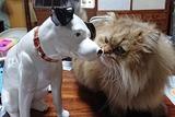 タロウ君とニッパー犬