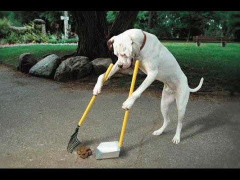 【朗報】これが犬を飼った場合の効能・・・すごすぎる
