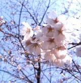 2006 花見