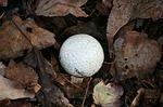 golfball-65646_150