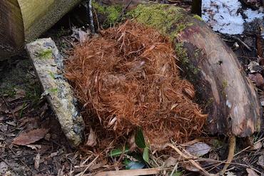 タイワンリスの巣
