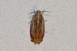 ツマベニヒメハマキ20200511