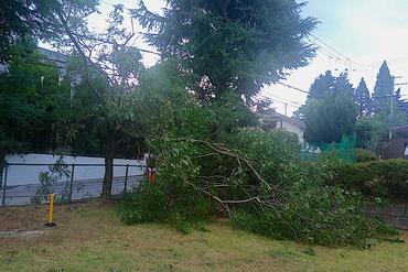 台風12号被害3丁目中央公園