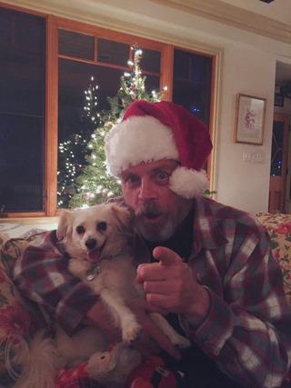 markhamillchristmas