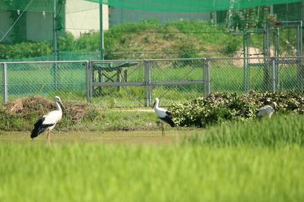 stork07 07 31 (18)