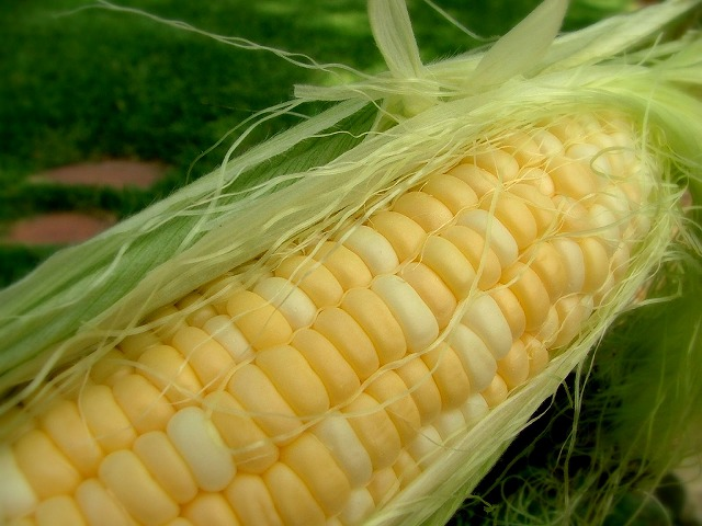 s-corn-maize-memorialday-1894603-o