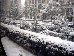 上海久々の大雪で積もる