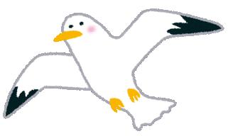 bird_kamome