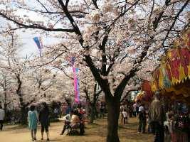 H220410桜