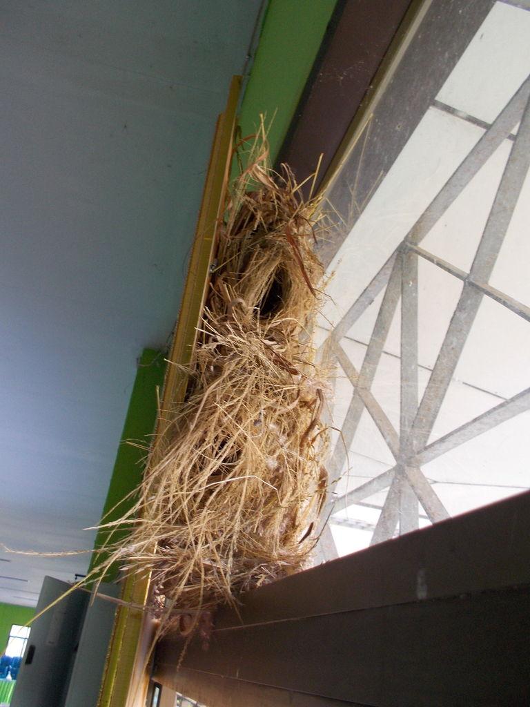 20180831-4 写真4.王さまの写真の裏にできた雀のお宿