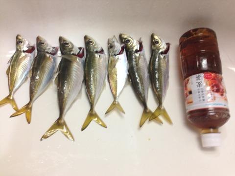 福浦1118魚01