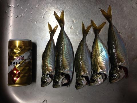 福浦1119魚01