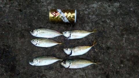 福浦1104魚01