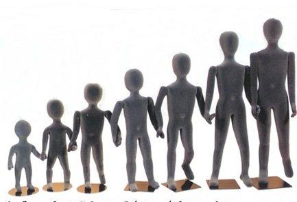 日本人男性の身長分布wwwwwwww